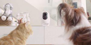 Pawbo Takip ve Akıllı Mama Dağıtım Cihazları Hayvan Sahiplerini Sevindirecek