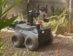 Yarasalardan esinlenerek robot yapıldı (Ses dalgalarıyla yön bulabiliyor) promegaweb izmir web tasarım